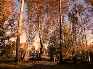 окулова Заимка золотая осень 5
