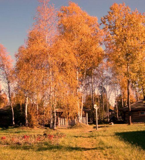 окулова Заимка золотая осень 8