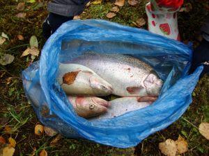 Рыбалка Окулова Заимка6