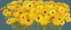 Flowers Florets 2 051
