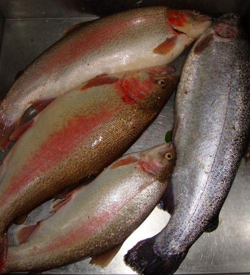 Рыбалка Окулова Заимка1