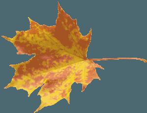 Autumn Leaves 018
