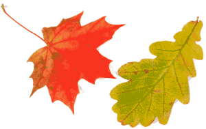 Depositphotos 1160251 Stock Photo Oak And Maple Leaves