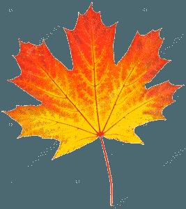 ОСЕНЬ 36963159 Stock Photo Yellow Autumn Leaf